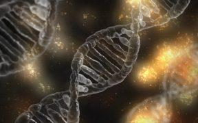 dna biogenetica biotech