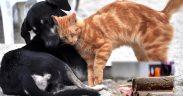 animali, cani, gatti e petardi